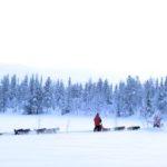traineau de chiens huskies en laponie finlande 2021 2022